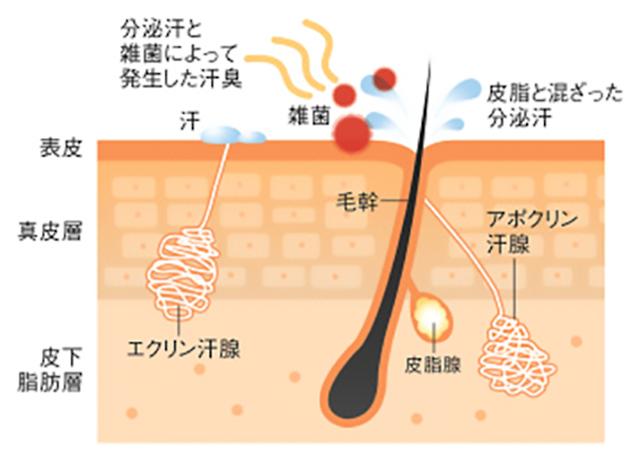 アポクリン腺を刺激する立川エリア唯一の溶岩ホットヨガ