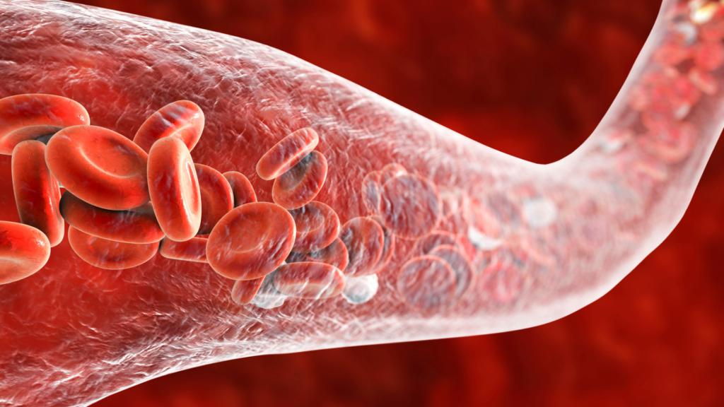 図解:白血球の異物パトロール。免疫力