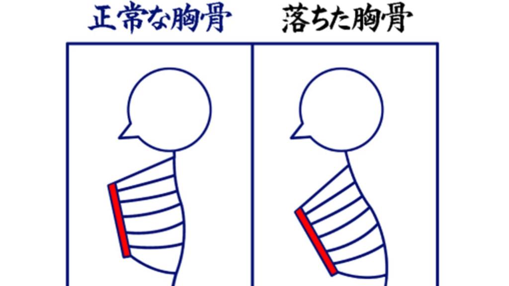 胸骨の違い
