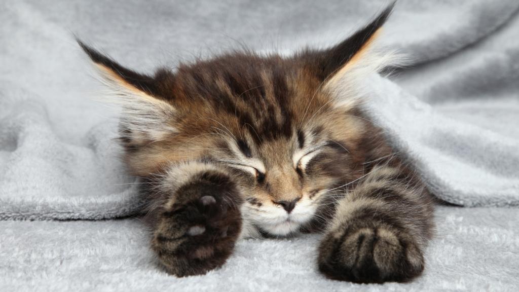 ヨガで快眠